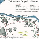 Yellowstone drop off divesite 5
